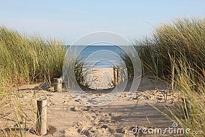 Beach Sand Dunes Access Path