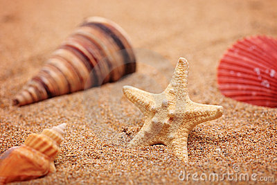 A beach sand with sea shell and star fis