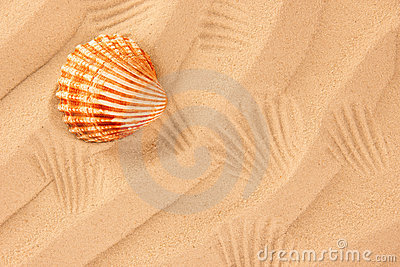 Beach sand with shell