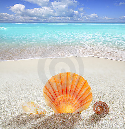 Free Beach Sand Shell Tropical Perfect Summer Vacation Royalty Free Stock Photo - 20087025