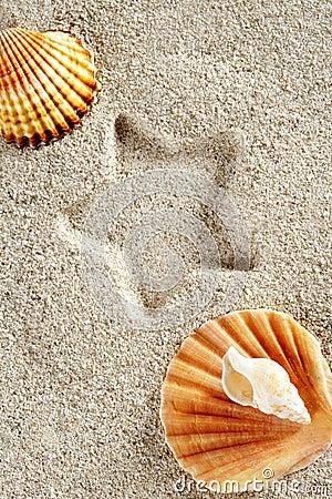 Beach sand summer clam shell star print vacation