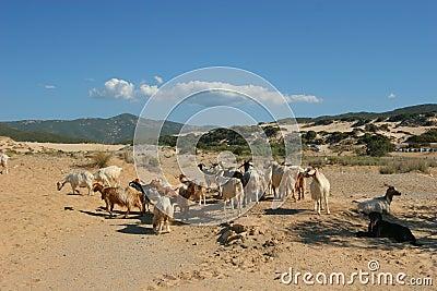 Beach of Sardinia