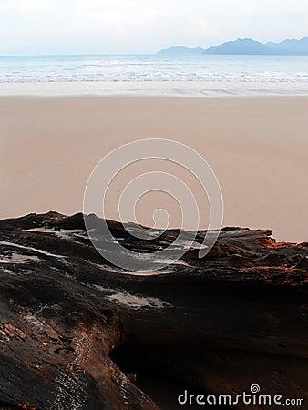 Beach scape minimal at dawn
