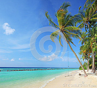 Beach scene with a swing on a palm tree