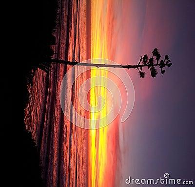 Beach scenery san diego