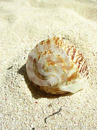 Beach shell