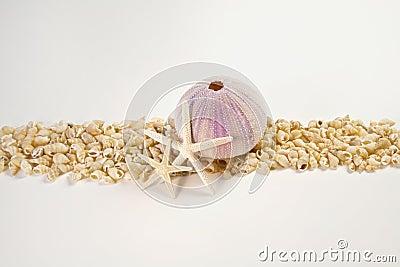 Beach shells and starfish border