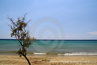 Beach and Shrub
