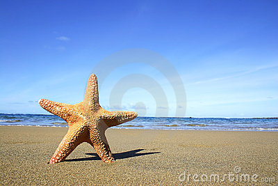 Beach and Starfish