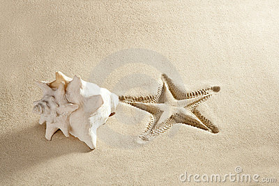 Beach starfish print  shell white caribbean sand