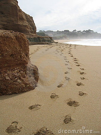 Free Beach Steps Royalty Free Stock Image - 28106