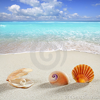 Beach summer vacation background shell pearl