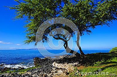 Beach Tree Vision
