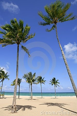 Beach In Tropical Florida Sunny Day Stock Photo - Image: 12220890