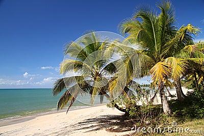 Beach in tropics