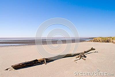 Beach with a trunk