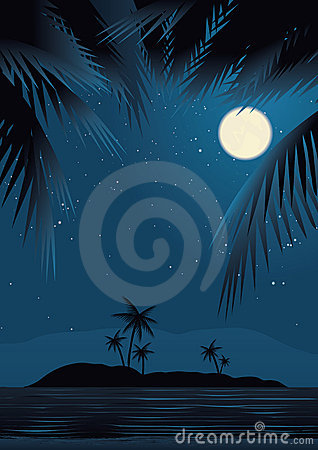 Beach Under Starry Sky