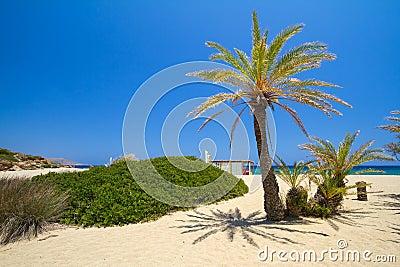 Beach Vai called Bounty beach on Crete