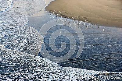 Beach Waves Seagulls and Sand