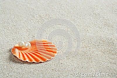 Beach white sand pearl shell macro
