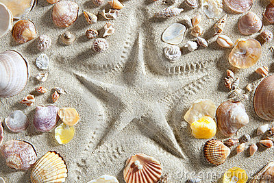 Beach white sand starfish print many clam shells