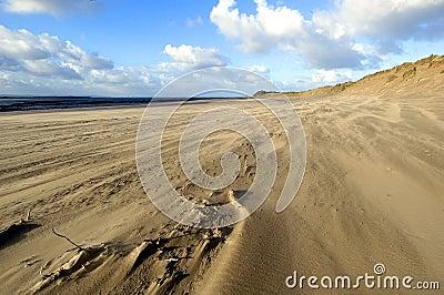 Beach in the Wind