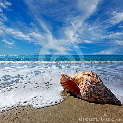 Free Beach With Shell Stock Image - 24541251