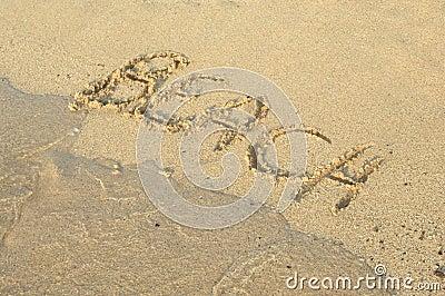 Beach Writing