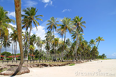 Beachfront in Bahia