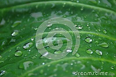 Beading Water Drops