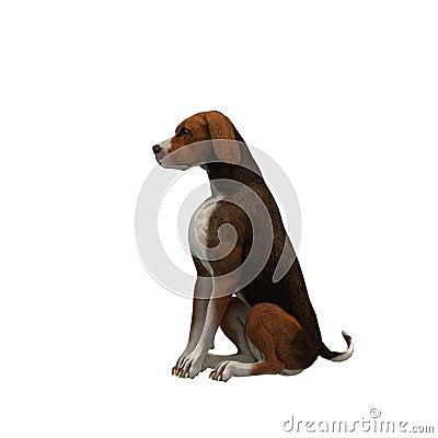 Beagle-brown on black - 01