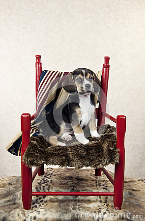 Free Beagle Puppy In A Chair Stock Photography - 51163022