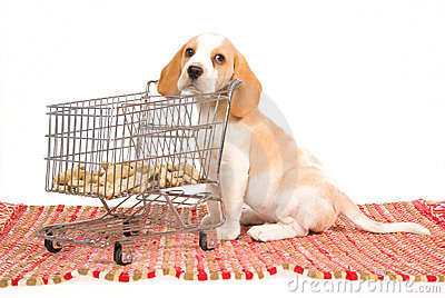 Beagle puppy with mini shopping cart