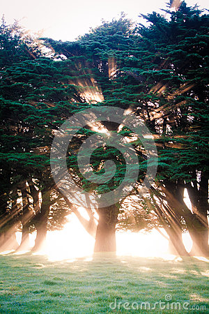 Beaming tree