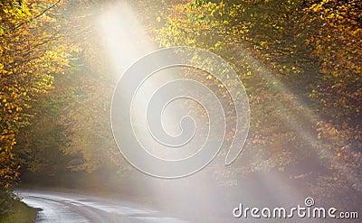 Beams of light show the way through autumn trees