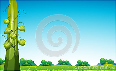 Beanstalk in field