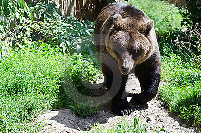 Bear Stock Photography - Image: 20838972