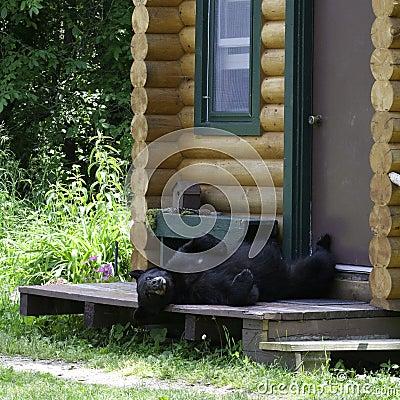 Bear on cabin porch