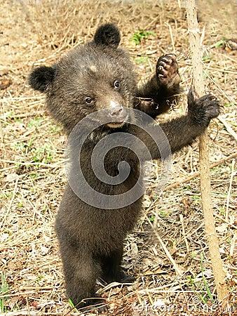Free Bear Cub Stock Image - 5722461