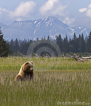 Bear cub and mountains