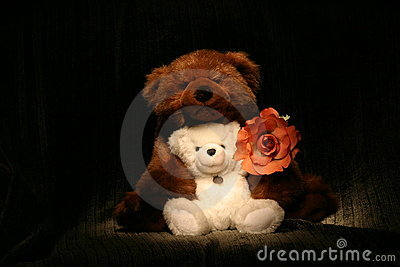 Bear Hug Rose2