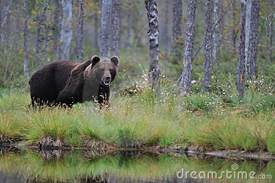 Bear next to a lake
