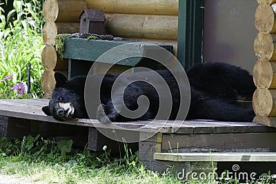 Bear on porch