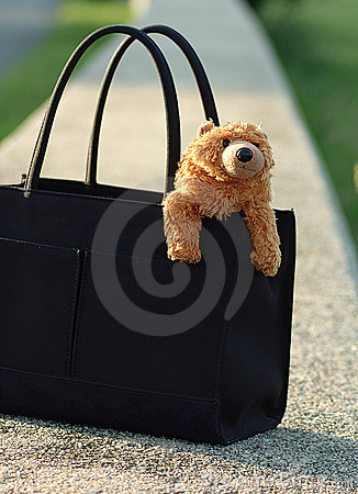 Bear in purse