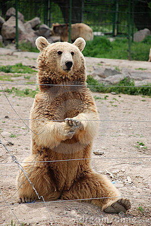 Bear sittting in a zoo