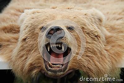 Bear Skin Rug.