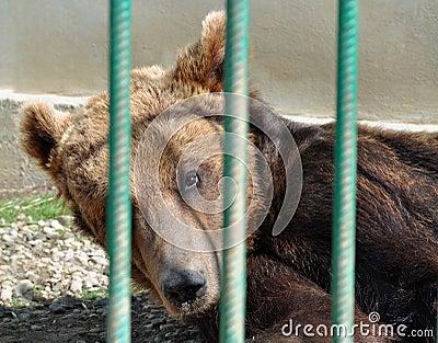 Bear zoo cage