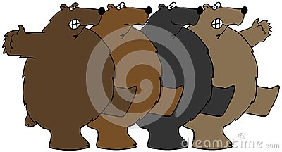Bears dancing the Can-can