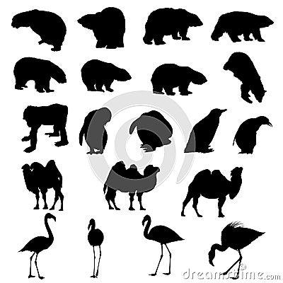 Bears, penguins, camel, flamingos