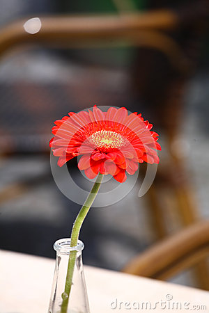 Beatiful red flower in a glass vase